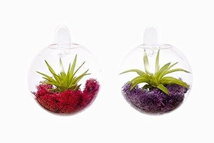 YangShop 10 Inch Luminous Tree Glass Handcraft Vase