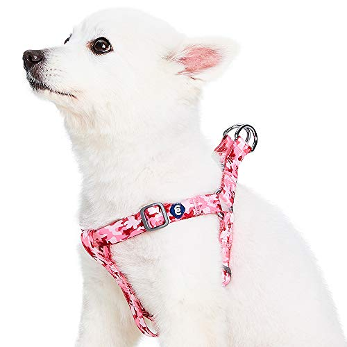 Blueberry Pet Essentials 10+ Patterns Zoo Fun Dog Collars, Harnesses or Leashes