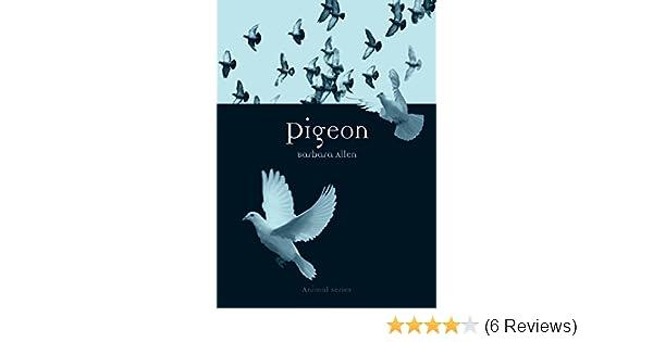 Pigeon Animal Allen Barbara 9781861895134 Amazon Com Books