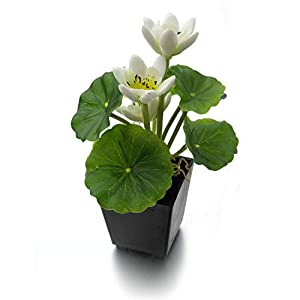 MaxFlowery Set of 2, Artificial Real Touch Lotus Plant with White Blooms in Matt Black Pot, Duo Fake Plants Greenery & Flowers with Square Planter 16
