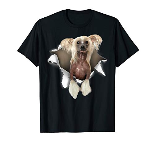 Chinese Crested Torn T Shirt, Chinese Crested dog torn shirt