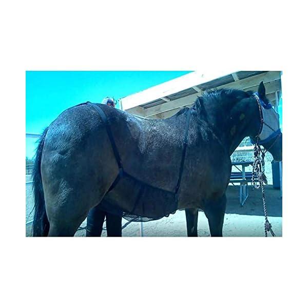 HilMe Cavallo Fly Tappeti, Cavallo Addome Coperte Elasticità Anti-zanzara Rete per Outdoor, Regolabile Flysheet Rete… 3 spesavip