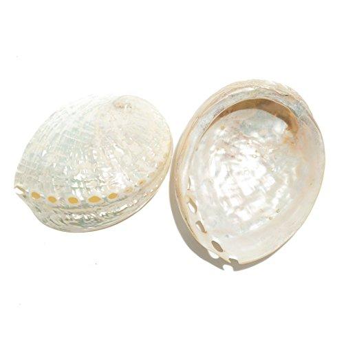 Pearled Abalone Shells | 2 pack Assimilis Pearled Abalone Sea Shells Polished 3