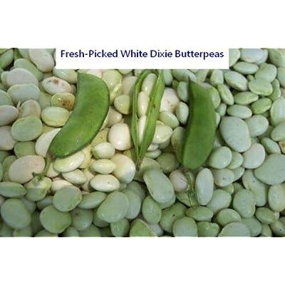 0.5 oz White Dixie Butter Pea Seed - Bush Lima Bean Butterpea Seeds (½oz to 8oz) : Garden & Outdoor