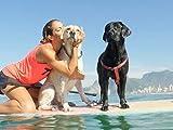 Cecilia and Her Labradors