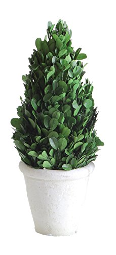 Creative Co-op Preserved Boxwood Cone Shaped Topiary in Clay - Tree Topiary Preserved