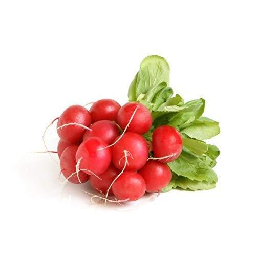 radici rosse NASTRO DI SEMI RavanelloCarmesa 7 m di nastro di semi rotondo