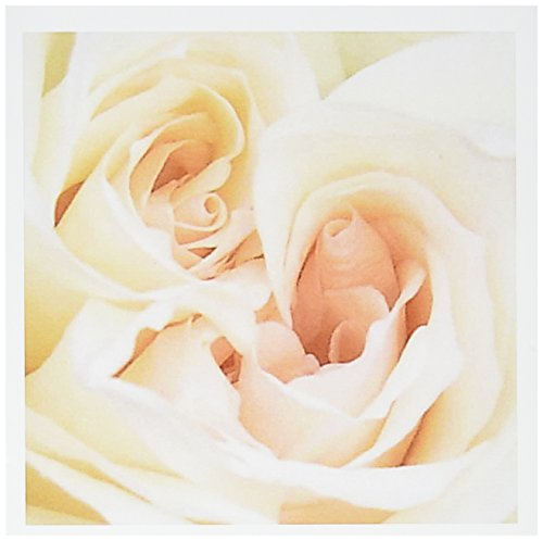 - 3dRose White Rose - marriage, wedding day, save the date, engagement, bridal shower, rose - Greeting Cards, 6 x 6 inches, set of 12 (gc_46793_2)