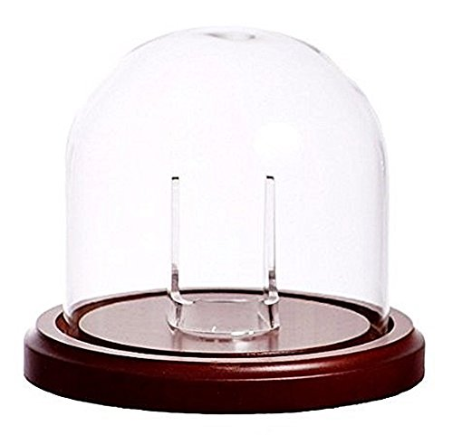 Large 4''x4'' Glass Pocket Watch Display Dome with Walnut Stained Wood Base by Dueber Watch Co