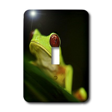 - 3dRose LLC lsp_10383_1 Light Green Tree Frog On A Leaf Single Toggle Switch