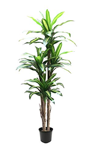 AMERIQUE Gorgeous 6' Tropical Dracaena Artificial Tree Silk Plant with UV Protection, Nursery Plastic Pot, Feel Real Technology, Super Quality, Green/Yellow ()