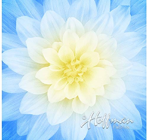 (Dream Big - Digital Panel -Large Floral -French Blue - by Hoffman Fabrics)