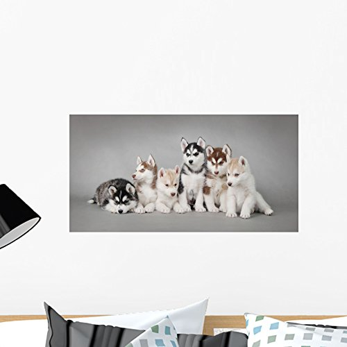(Wallmonkeys Siberian Husky Dog Puppy Wall Decal Peel and Stick Graphic WM352579 (24 in W x 12 in H))