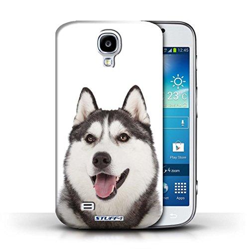 Etui / Coque pour Samsung Galaxy S4/SIV / Husky/Esquimau conception / Collection de Chiens