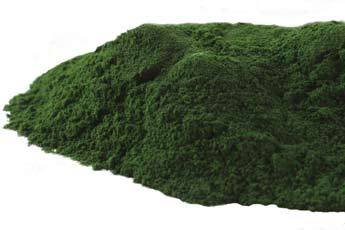 Mountain Rose Herbs - Chlorella Powder 1 lb