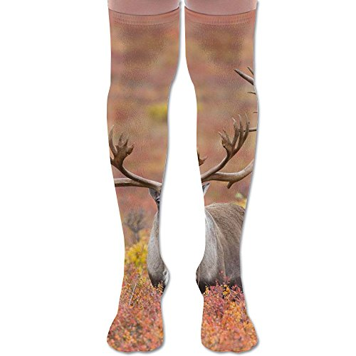field dress a caribou - 3