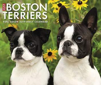 BEST VALUE 2019 BOSTON TERRIERS DESK CALENDAR-COMES WITH A FREE SET 0F 4 HANDMADE CHRISTMAS CARDS- A TWENTY VALUE-CALENDAR PLANNER,CALENDAR WALL,POCKET MONTHLY,2019 CALENDAR MONTHLY