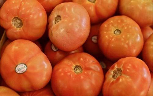 Creole Tomato Seed - Late Heat Loving Indeterminate Tomatoes Seeds, Bulk Seeds, 1 gr