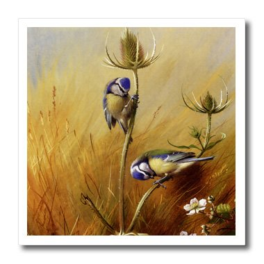 3dRose ht_79450_3 Vintage Bird Art Blue Tits On A Teasel Created in 1922 by Artist Archibald Thorburn-Iron On Heat Transfer, 10 by 10