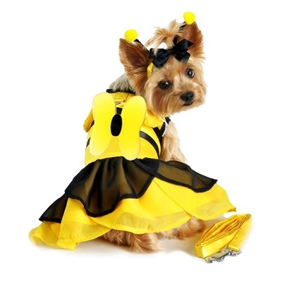 Bumblebee Costume Dog (Bumblebee Fairy Dog Costume, Medium)