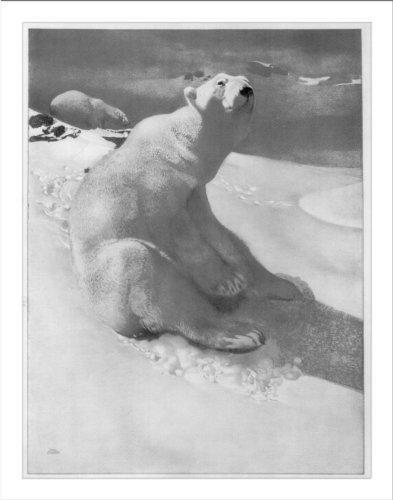 (Historic Print (L): [A polar bear seated on snow and another polar bear walki...)