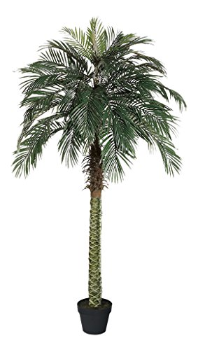 AMERIQUE Gorgeous 6 Feet Tropical Phoenix Palm Tree Artificial Silk Plant with UV Protection, with Nursery Plastic Pot, Feel Real Technology, Super Quality by AMERIQUE