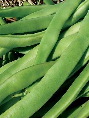 Kentucky Wonder Bush Beans ½ OZ ~50 seeds (Bush Beans Wonder Kentucky)
