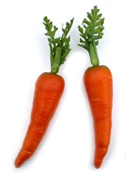 Country Carrot, Artificial Vegetable Fake Food, Bag of 12, 2 Sizes