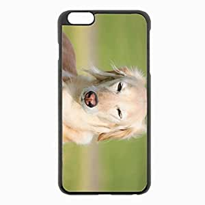 iPhone 6 Plus Black Hardshell Case 5.5inch - saluki dogs grass Desin Images Protector Back Cover