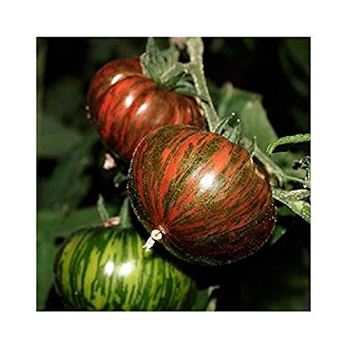 David's Garden Seeds Tomato Slicing Chocolate Stripes 1139 (Multi) 50 Non-GMO, Heirloom Seeds