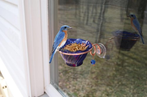 Songbird Essentials SEHHBBWF Bluebird Mealworm