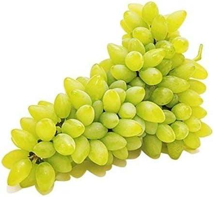 kyoho Traubensamen s/ü/ßer nat/ürlicher Snack Bio-Samen f/ür Pflanzung Garten Hof 20 St/ück Fruchttraubensamen schwarz//rot//gr/ün Erw/ähnung Kind lecker - Giant Rose Grape Seeds nahrhafter