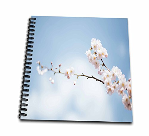cherry blossom drawing book - 2