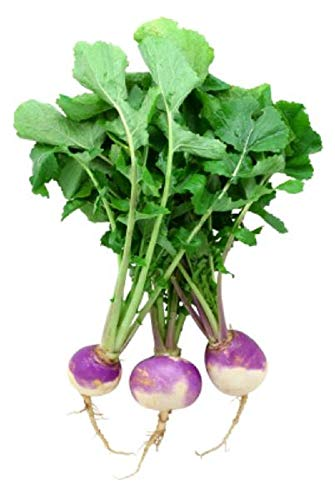 Top Turnips Purple - Purple Top White Globe Turnip Seeds, 1 Pound