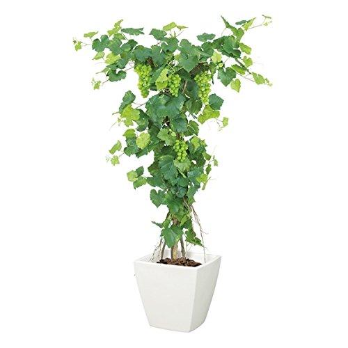 グレープツリー(M)(ナチュラルトランク)【造花アートフラワー】《ポット(鉢)は別売りです》(NGT2027M) B00IM43A8A