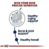 Royal Canin Large Aging 8+ Senior Dry Dog
