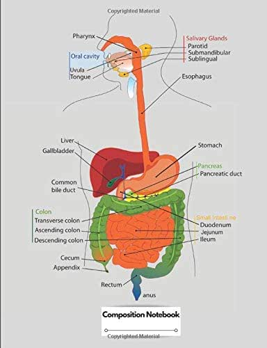 Composition Notebook: Human Digestive System Labelled Diagram Chart
