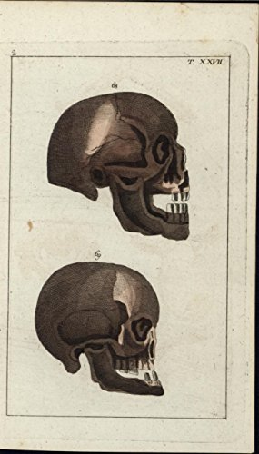 Human Skulls 1812 rare Vienna antique engraved hand color print