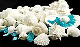 White Decorative Sea Shell with Pearlized Ocean Blue Sea Glass Chips |1 Pound for Decoration | Shells for Craft | Nautical Crush Trading TM