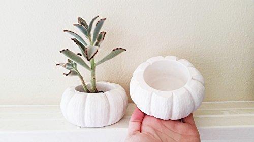 Pumpkin planter, pumpkin dish, pumpkin candle holder, realistic pumpkin