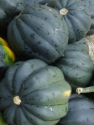100 Bush Acorn Squash Seeds Table King 82 (Bush Acorn Squash)