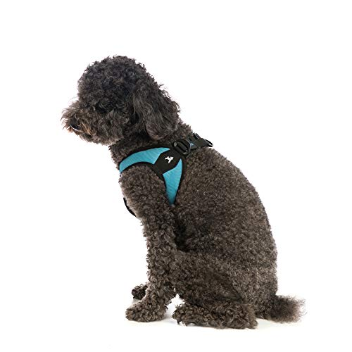 Gooby - Escape Free Easy Fit Harness, Small Dog Step-In Harness for Dogs that Like to Escape Their Harness, Turquoise, Medium