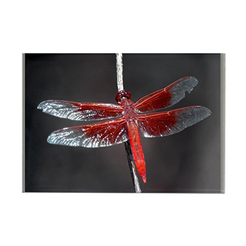 Rectangle Magnet Red Flame Dragonfly