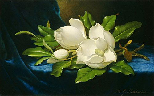 Martin Johnson Heade Magnolia (Martin Johnson Heade - Giant Magnolias on a Blue Velvet Cloth, Size 22x36 inch, Canvas art print wall décor)