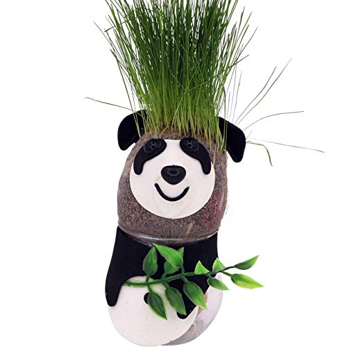 AvoSeedo Grass Head - Funny Fast Growing Grass Head Learning Toy for Kids (Panda Bear)