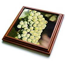 Danita Delimont - Grapes - Grape vines at Mission Hill Family Estate, Kelowna, BC, Canada. - 8x8 Trivet with 6x6 ceramic tile (trv_205912_1)
