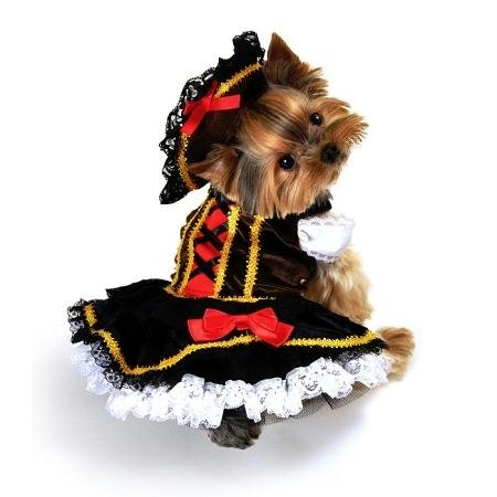 Swashbuckler Pirate Girl Dog Costume