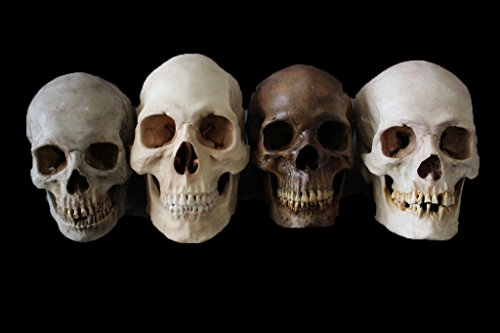 4 Assorted Museum Quality Cast Skulls | Halloween Prop - Haunted House Decoration BACK FROM THE (The Cast Of Halloween 4)