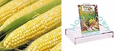 Homegrown Corn Seeds, 120 Seeds, Sweetness Bicolor Corn