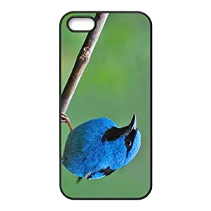 Myophonus caeruleus Hight Quality Plastic Case for Iphone 5s